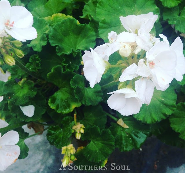 Planting spring flowers | A Southern Soul